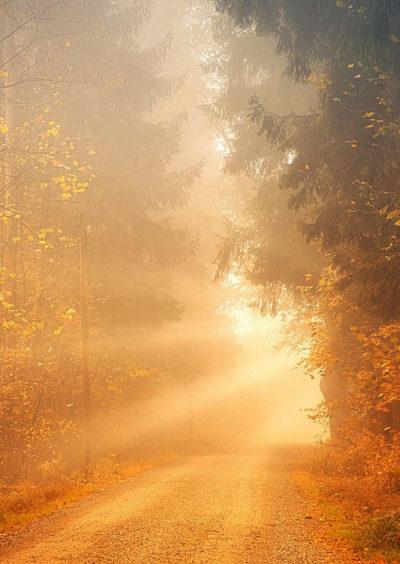 cesta v lese ke slunci