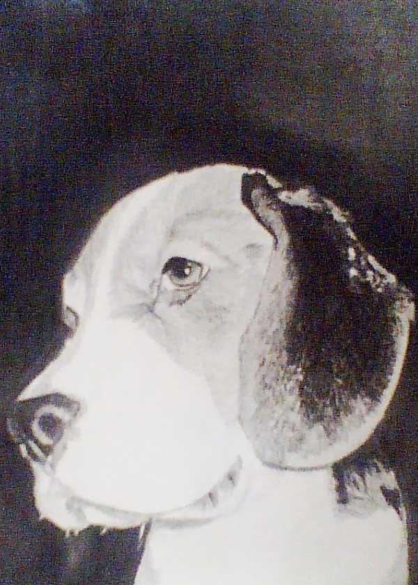 Kresba domácího mazlíčka - pes