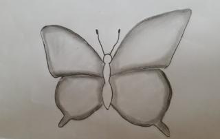 kresba motýl