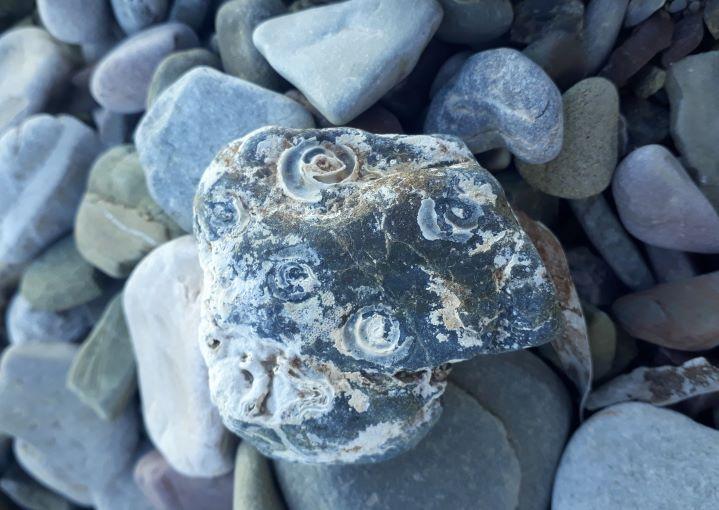 fosílie